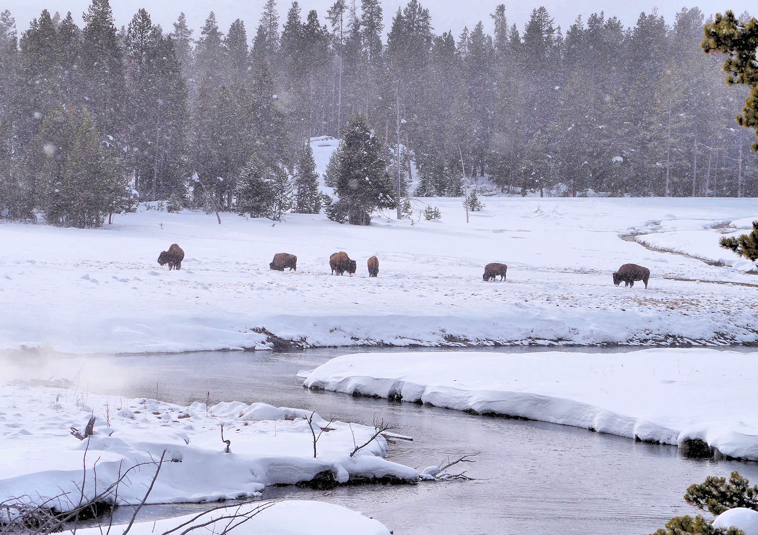 Yellowstone National Park Winter Trip
