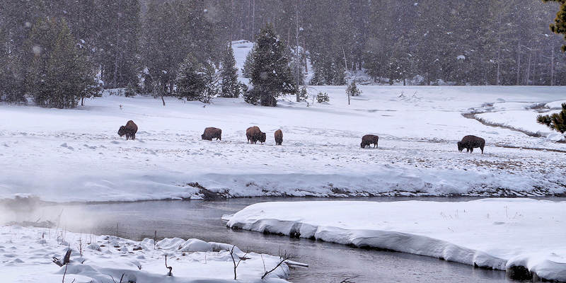 Yellowstone Winter Vacation Travel Guide