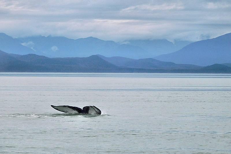 Whale Watching Juneau